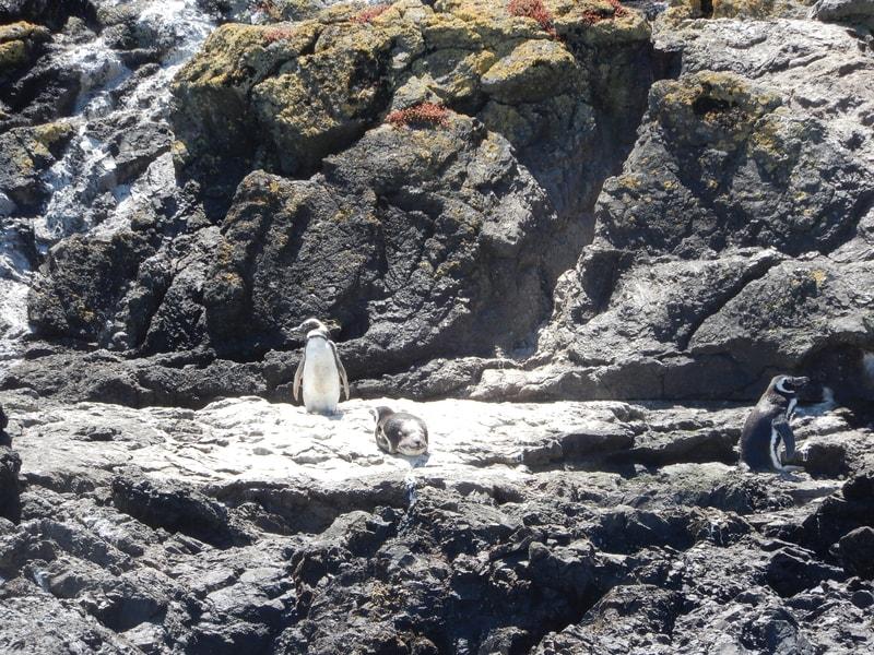 Puerto Montt - Chiloé